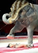 the elephant and ...