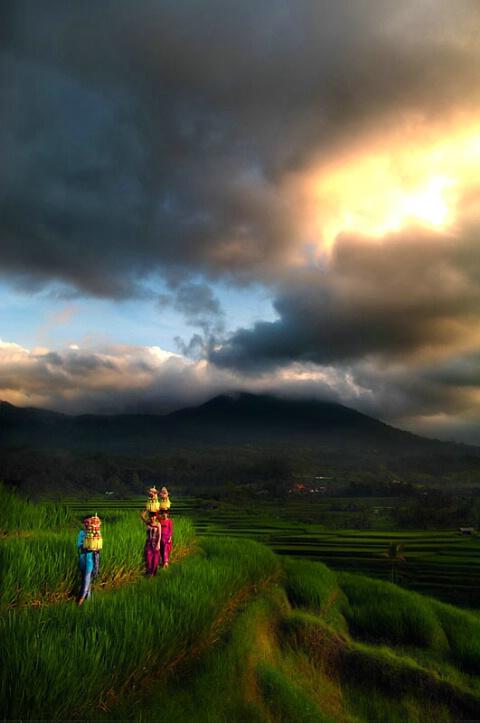 Rhythm of Bali
