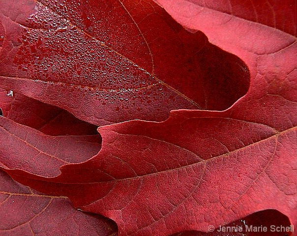 Red, Red Leaves