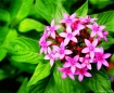 oklahoma_gardenin...