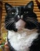 Portrait of my ca...