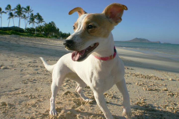 Canine Beachcomber