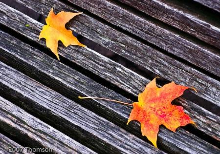 Washington:  Fall Leaves