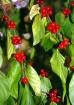 wild fruits...