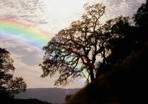 oak_silhouette_with_rainbow