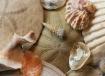 Finding Seashells