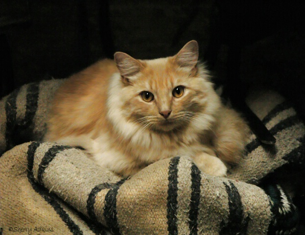 Dr Punkerman, Barn Cat - ID: 5130662 © Sherry Karr Adkins