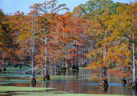 Fall On The Bayou 2