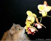 Orchid Inspection