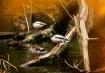 Ducks on a Tree