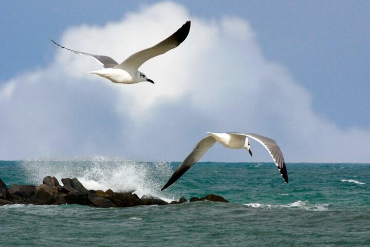 Seagulls - ID: 5178745 © Carolyn Keiser