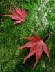 - Fallen Leaves -