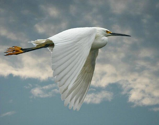 White Wings - ID: 5189531 © Kathy Reeves