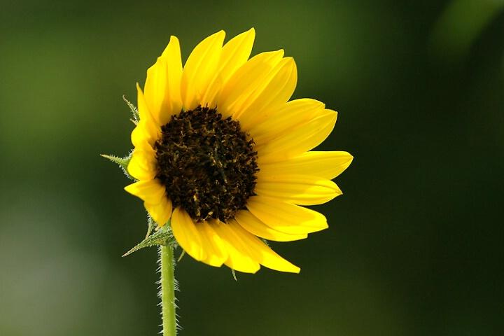 Yellow On Green - ID: 5206970 © William S. Briggs