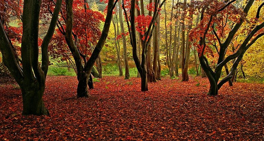 - Autumn Glory -