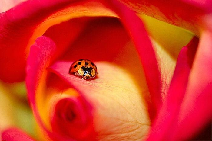 Lady Bug, Lady Bug