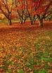 ~ Fallen Leaves ~