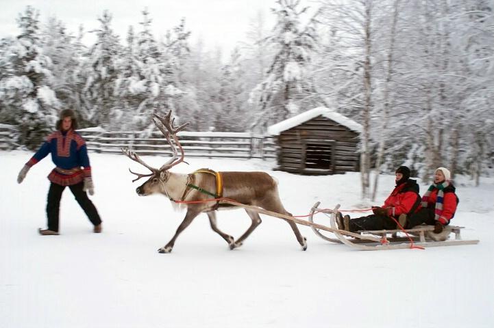 Reindeer farm with sledge rides - ID: 5247108 © Eleanore J. Hilferty