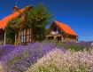 purplehazelavenda...