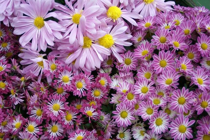 Full Frame Floral