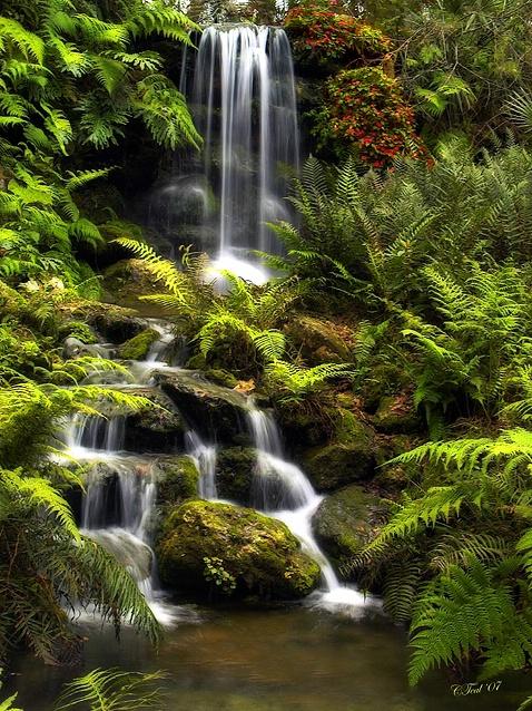Nature's Gift: Refreshing Water