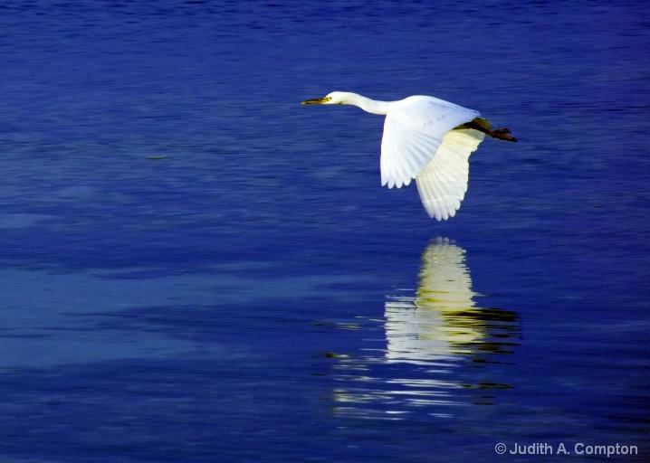 morning flight - ID: 5314018 © Judith A. Kambara