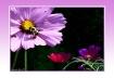 """Lavender Bee..."