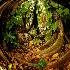 © Anna Scharf PhotoID # 5327531: The Banyan Paradise