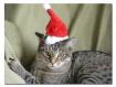 MERRY CHRISTMAS !...