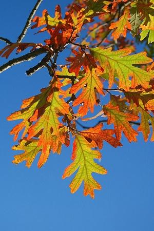 ~Fall Leaves~