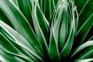 duotone_cactus