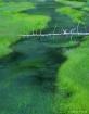 Obsidian Creek YN...