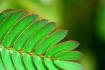 Cool Green ...