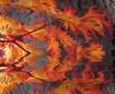 Fantasy Autumn Le...