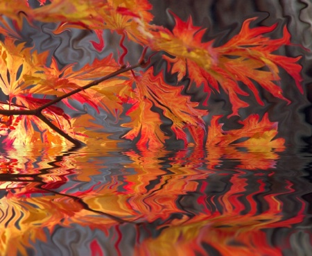 Fantasy Autumn Leaves