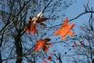 Autumn Lingering