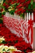 Candy Canes and F...