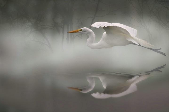 Morning Mist - ID: 5403518 © Kathy Reeves