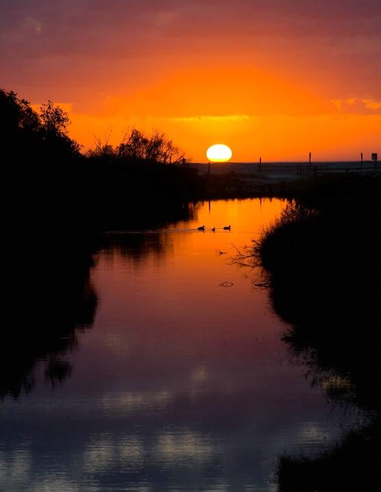 Sunrise With Ducks, Chincoteague NWR - ID: 5427032 © Richard S. Young