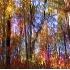 © Anthony Tuttle PhotoID# 5433048: Forest Impressions I