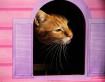 Feline Window
