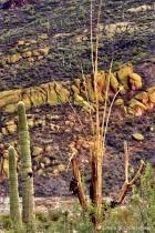 Desert Treasures, Tonto National Forest