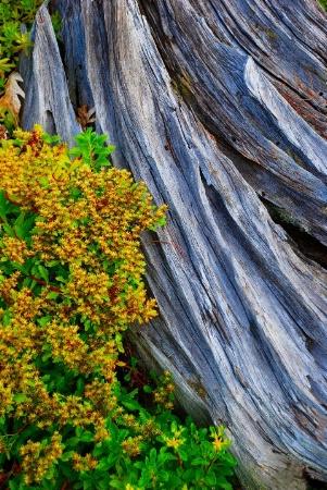 Driftwood and Sedum