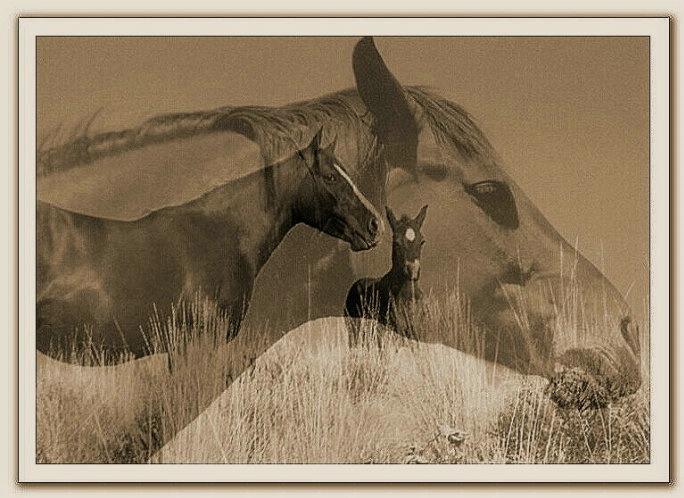 layered horses