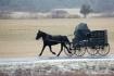 Cold Amish Mornin...