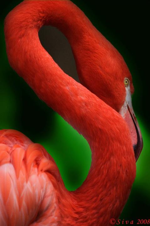 Flamingo Close Up!