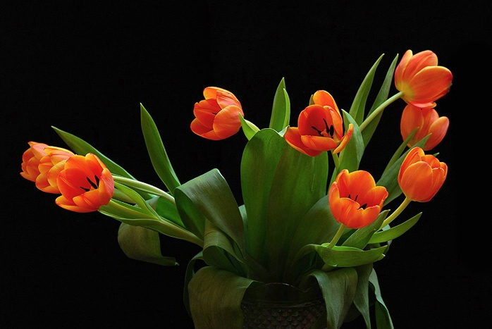 Tulip Everywhere