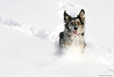 ~Snow Dog~