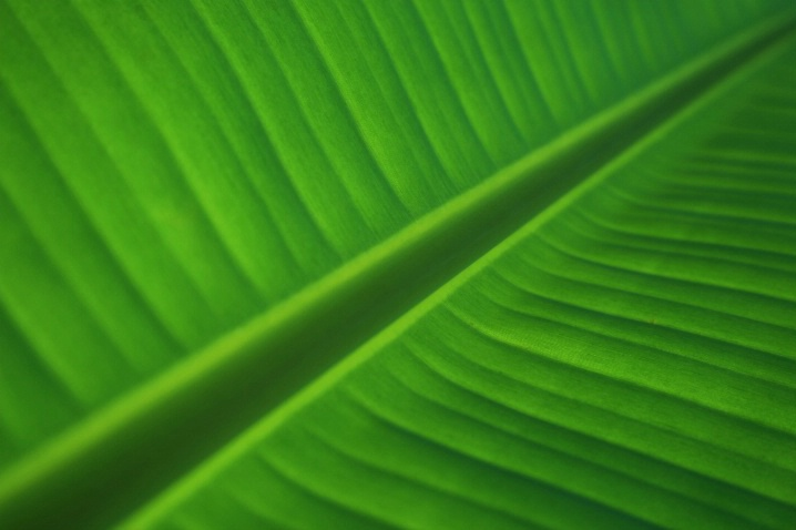 Diminuendo of Green