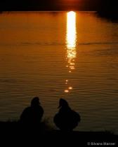 Romantic Evening at the Lake